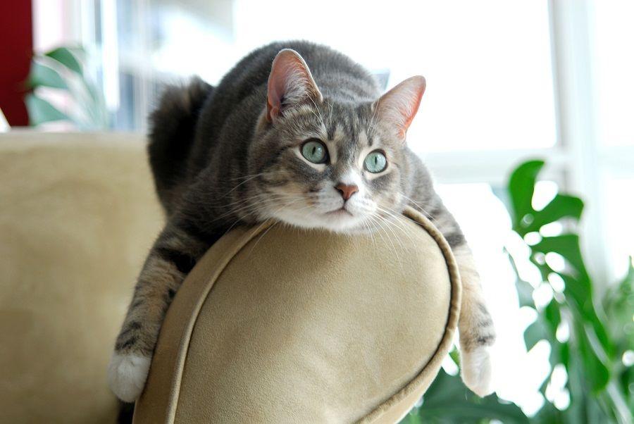 Мебель для кошек: расскажем и покажем все варианты для вашего питомца
